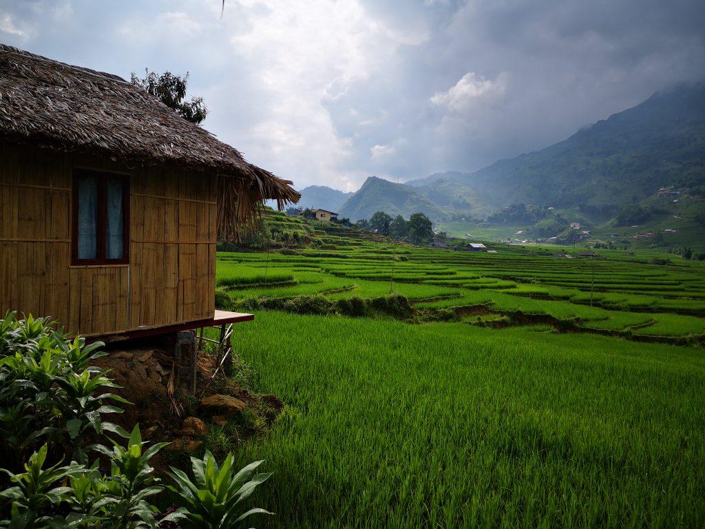 Sa-Pa-Golden-Rice