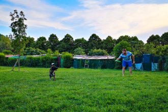 Achille-in-area-cani