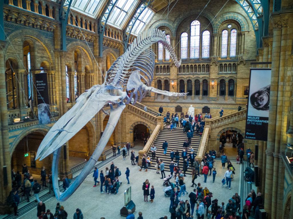 Natural-History-museum-come-rispariamiare-a-Londra