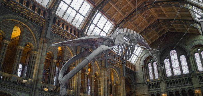 Copertina-Musei-gratis-a-Londra