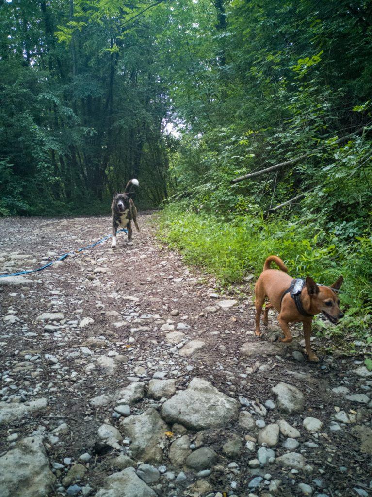 Achille e Cody - passeggiata da San Ponzo a Guardamonte