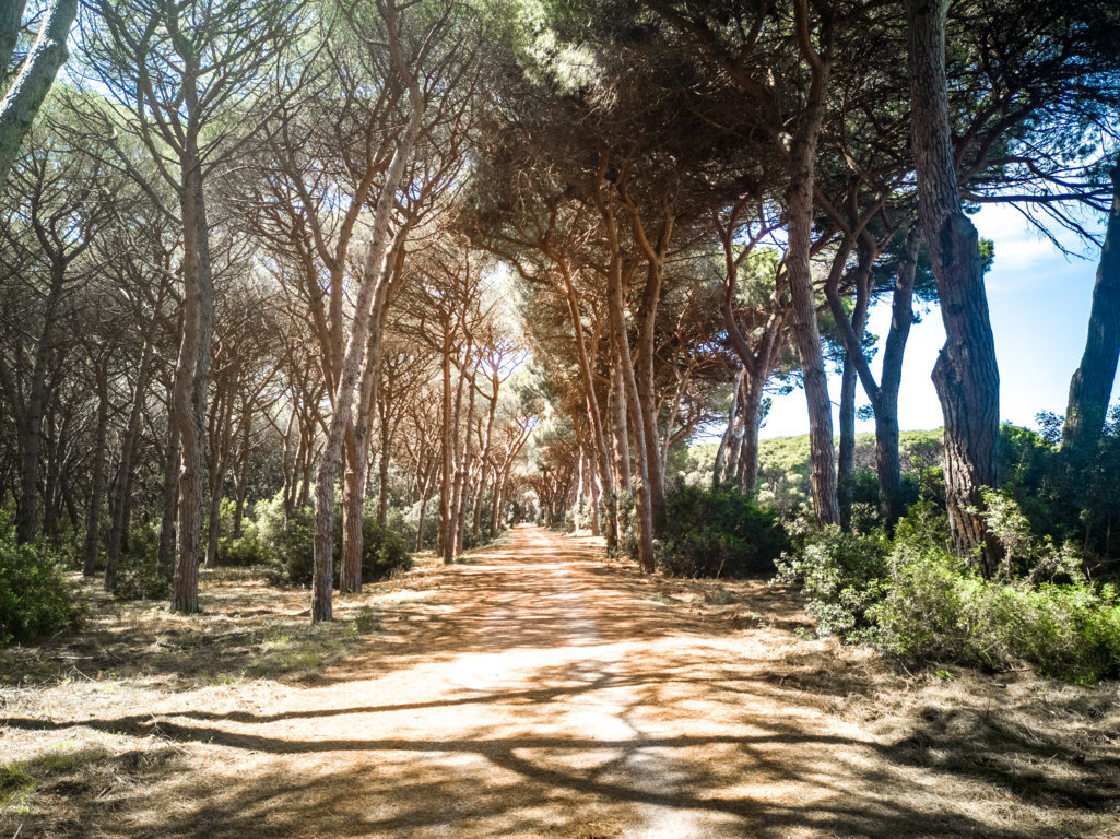 Spiaggia-della-Feniglia-Maremma-pet-friendly