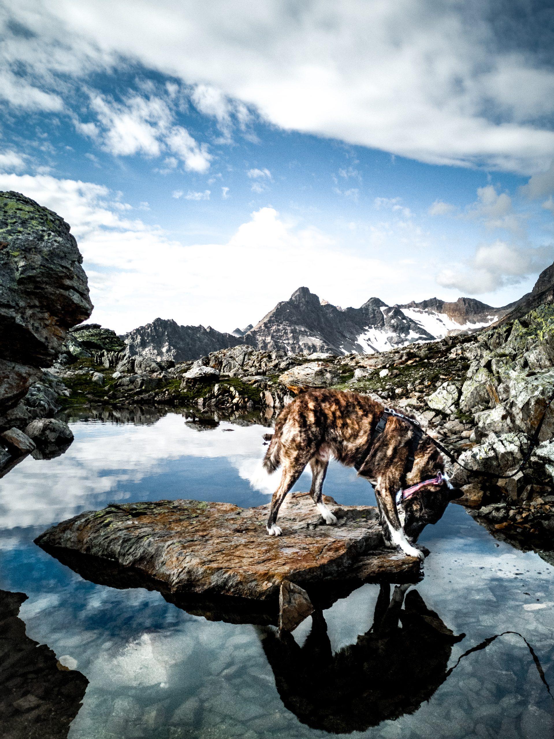 trekking-per-Lotschenpasshutte